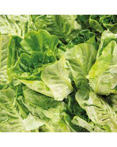 Little Gem Lettuce 2 Pack