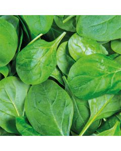 Spinach Pack 200g