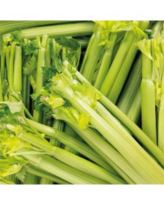 Celery Stick